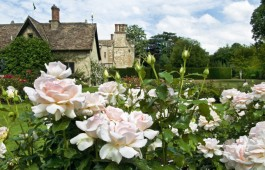 'Soham Rose' in the Rose Garden at Anglesey Abbey, Cambridgeshire. Credit: NTPL/Brian & Nina Chapple