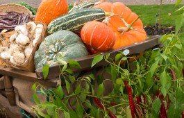 A-Barrow-of-harvest-vegetables-at-the-Taste-of-Autumn-Festival-2-(2)-jpg