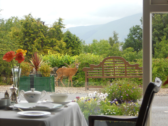 A deer passes by the restaurant at Airds Hotel, Port Appin, Argyll, Scotland