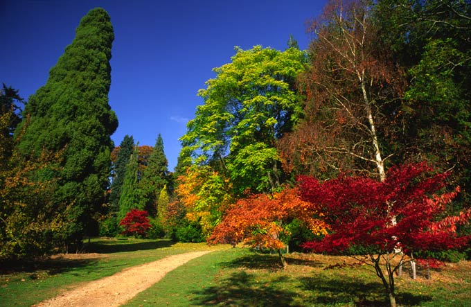 Dazzling autumn colours at Batsford Arboretum © Alamy