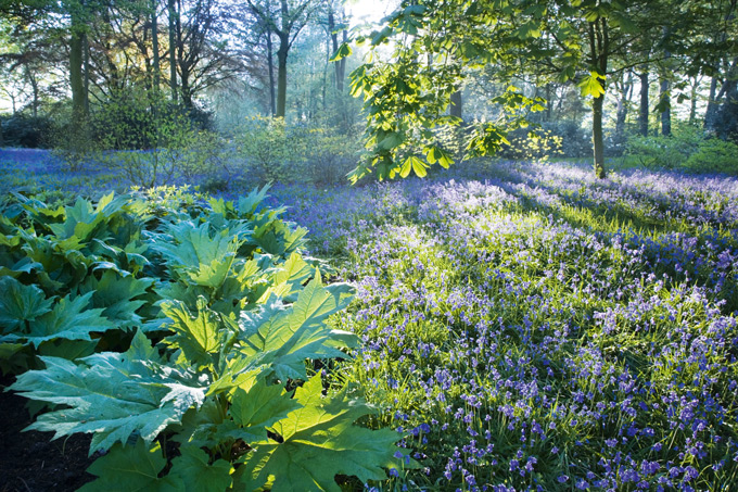 Bluebells-at-Dunham-Massey,-©National-Trust-Images-Andrew-Butler-1