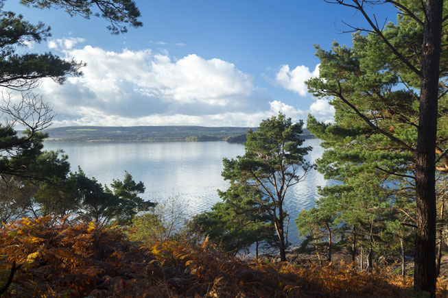 Brownsea Island, Poole Harbour, British islands