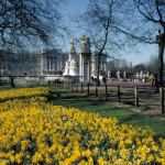 Beautiful Buckingham Palace in Spring