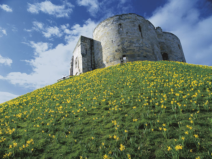 Clifford_s-Tower-surrounded-by-daffodils-1ma
