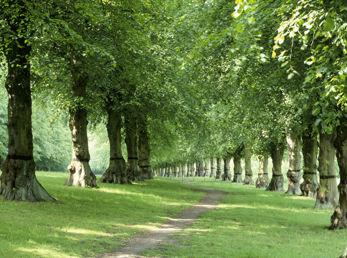 ClumberPark-Lime-Avenue©National-Trust-ImagesAndrew-Butler