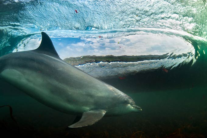 George Karbus, 'In The Living Room', Bottlenose Dolphin, Bollintoy, near The Giant's Causeway, Northern Ireland, OVERALL WINNER