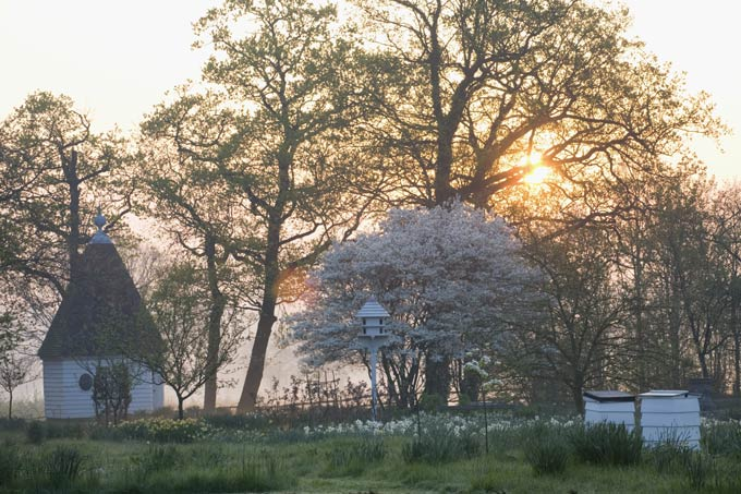 In-the-Orchard-at-dawn,-Sissinghurst-©National-Trust-Images