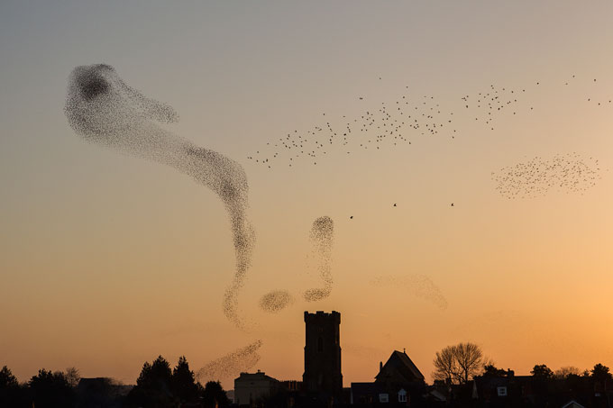 Nigel-McCall,-'Starlings-over-Carmarthen',-South-West-Wales,-Winner---Urban-View-1