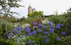 Agapanthus 'Loch Hope' and Anemone hybrida 'Honorine Jobert' in the Rose Garden with the Tower in the distance at Sissinghurst Castle Garden, near Cranbrook, Kent