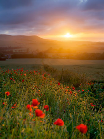 South_Downs_National_Park
