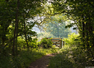 View of the woods in the Stanmer Country Park, Brighton. Credit: Visit Britain