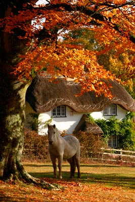 New Forest © VisitEngland